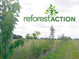 Bandit ALM s'engagent aurpès de Reforest'Action à préserver la biodiverté